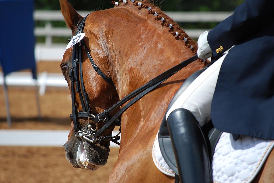 bigstock-Dressage-Rider-In-Competition-3821574