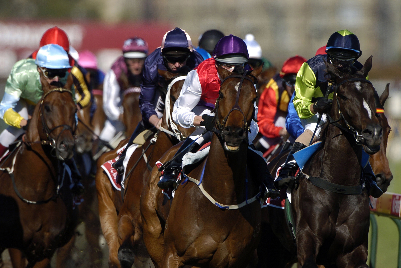 Action of a bunch of race horses during a race head-on.