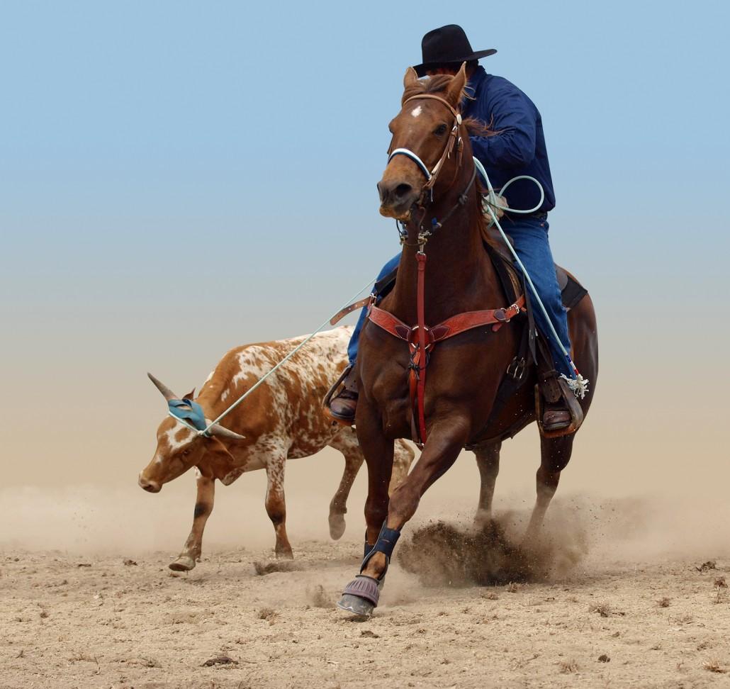 Equine Health Balanced Eco Solutions